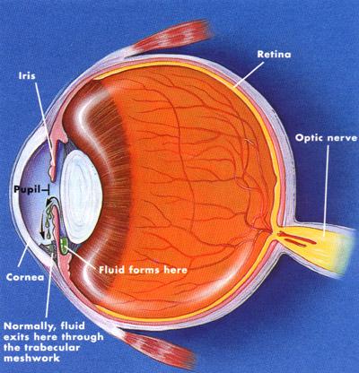 La presión ocular y el glaucoma